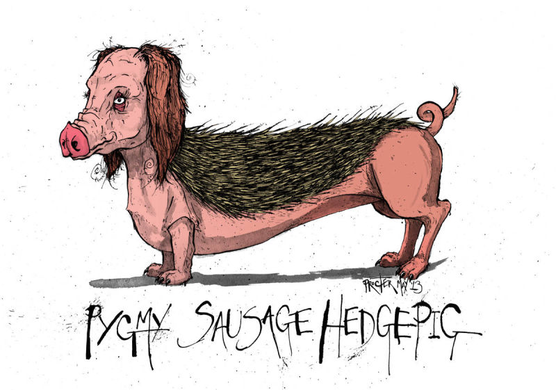 A spliced together animal of a sausage dog, pig and a pygmy hedgehog